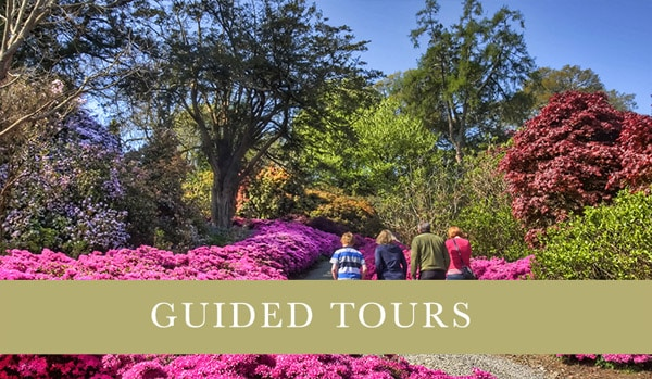 Mount Congreve Guided Tours - Woodland Hikes